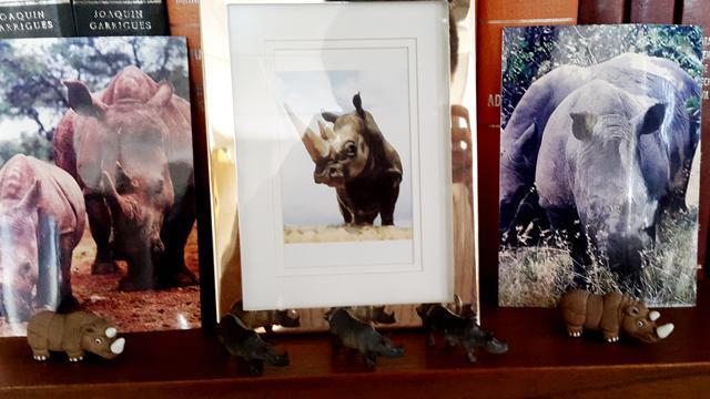 En el antiguo despacho de Luis Martínez, sobreviven 38 rinocerontes que puso en su oficina por consejo de su libro guía: