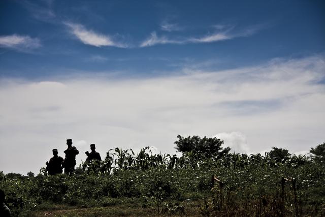 Policías custodian una milpa en la que se descubrió un cementerio clandestino.