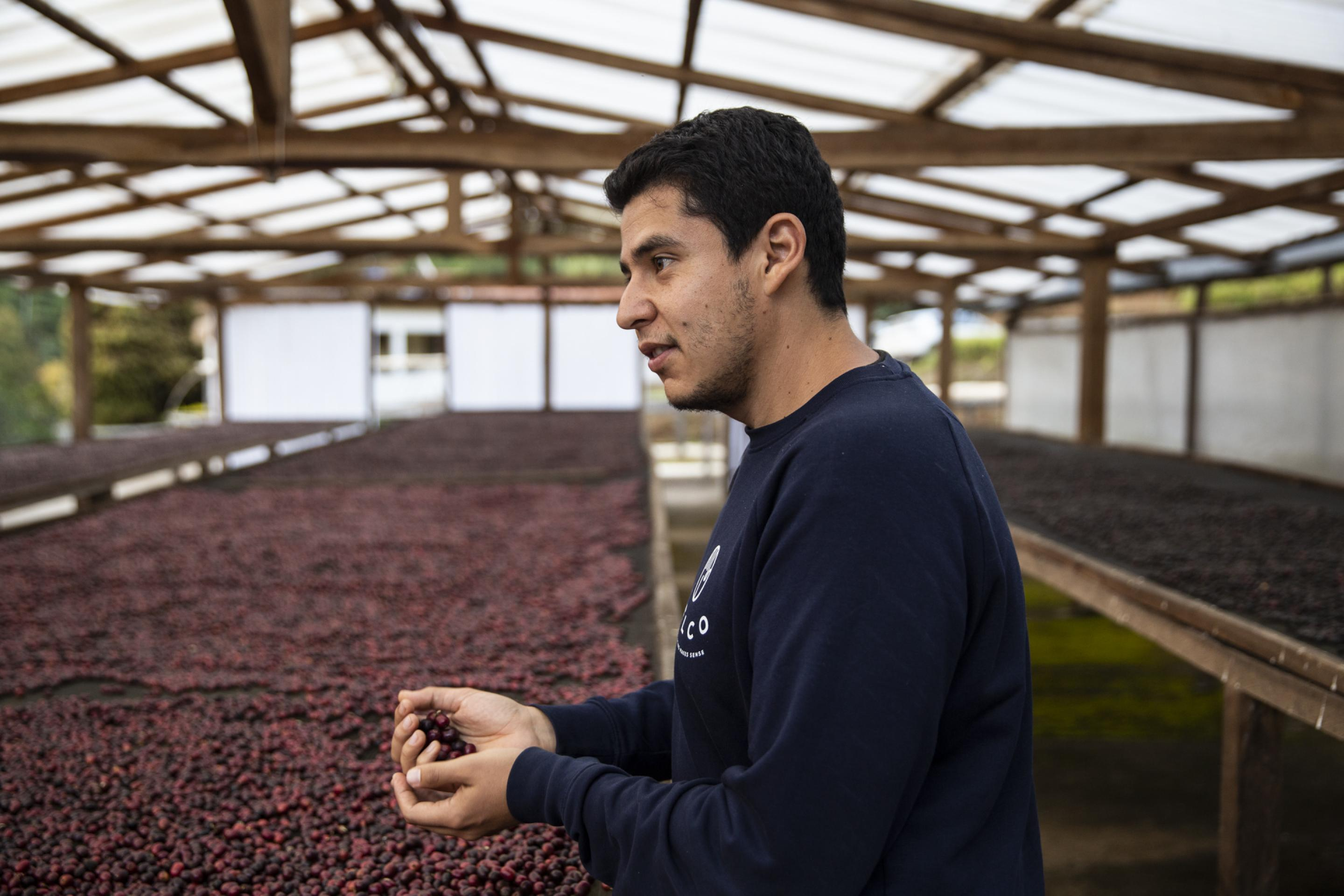 Ángel Barrera is an agroindustrial engineer, MSc in Food Technology, fourth generation of a coffee producing family in El Salvador, and current Head of Sourcing at BELCO, an independent French importer of sustainable coffees. Ángel is passionate about reading & writing, professional on the first & amateur on the second.